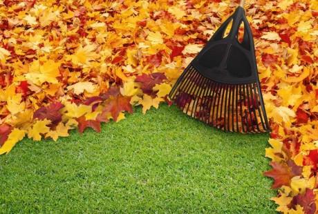 Fall Maintenance Tips - Rake the Leaves
