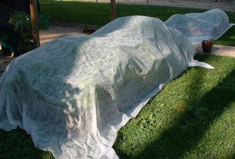Cover more tender plants such as annuals, perennials and vines with frost cloth as necessary to protect from harsh freezes.