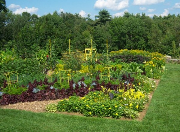 I recommend finding something you love and working to achieve the same effect. This is one of my favorite edible gardens in Boylston, MA. - this photo does not do it justice - Photos help to inspire you in designing your beautiful harvest!