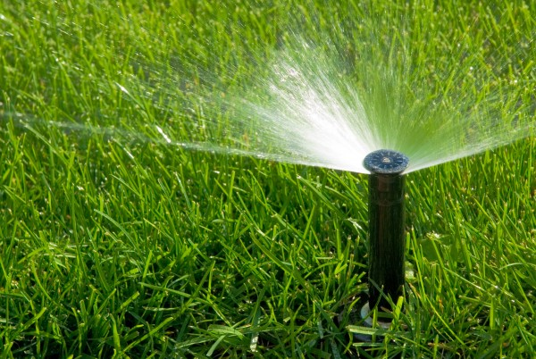 April Maintenance Tip - Keep watering as needed