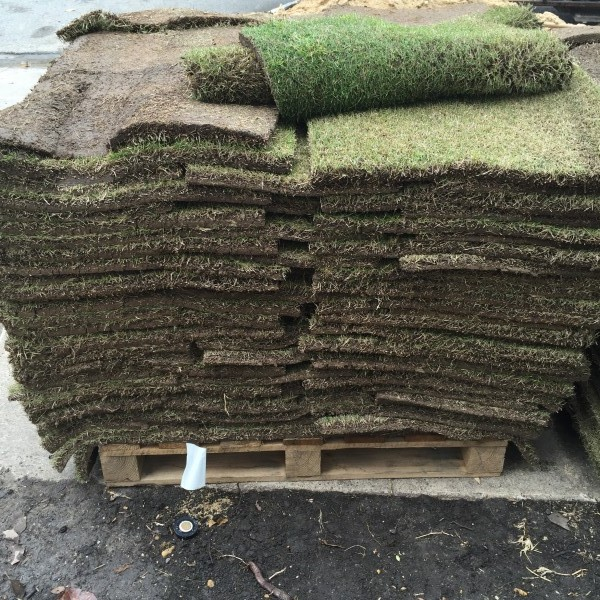 Plant Sod in May - Bermuda