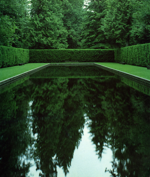 Modern contemporary hedge around reflecting pond