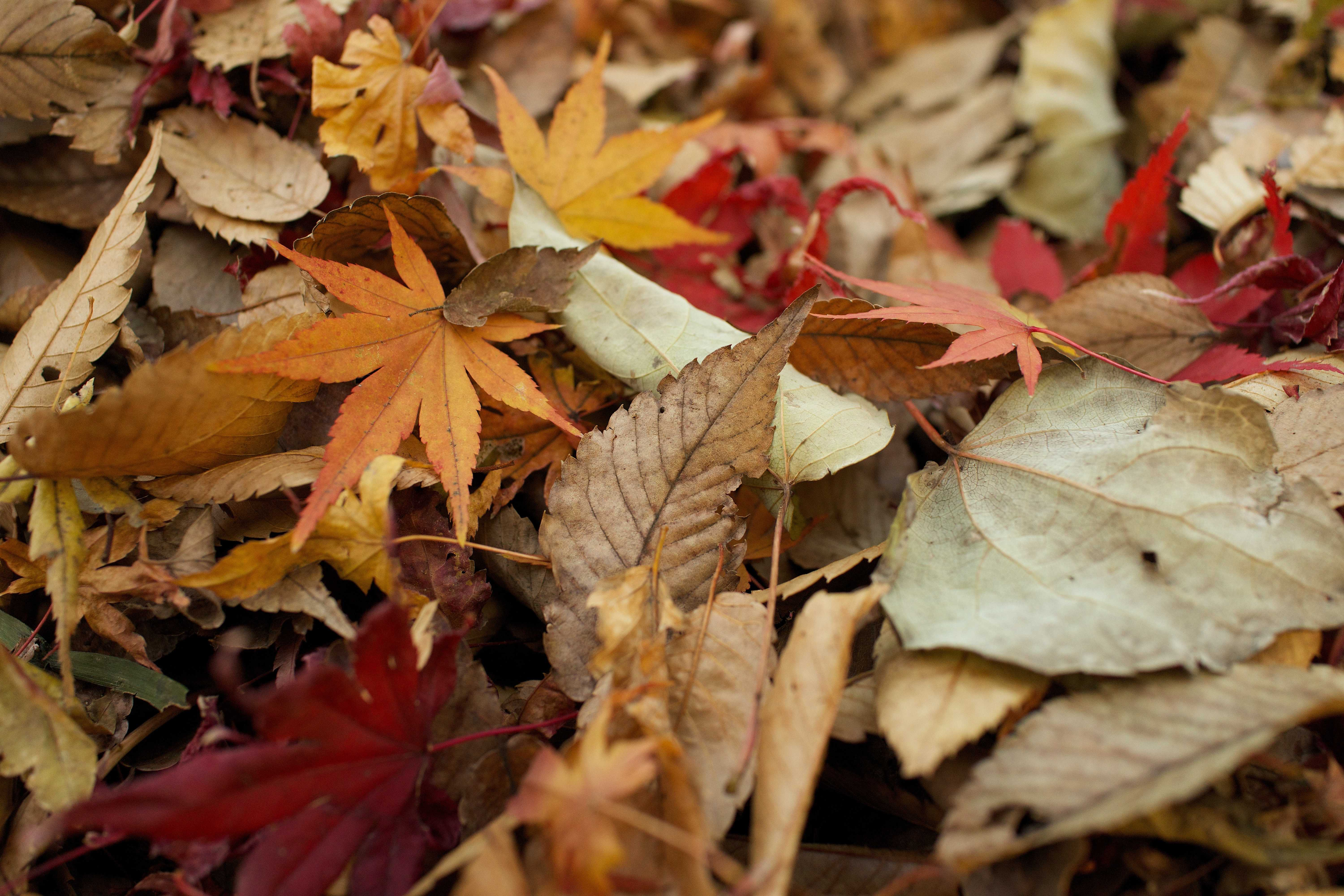 Fall 2015 - Winter 2016 Seasonal Color Inspirations for Landscape