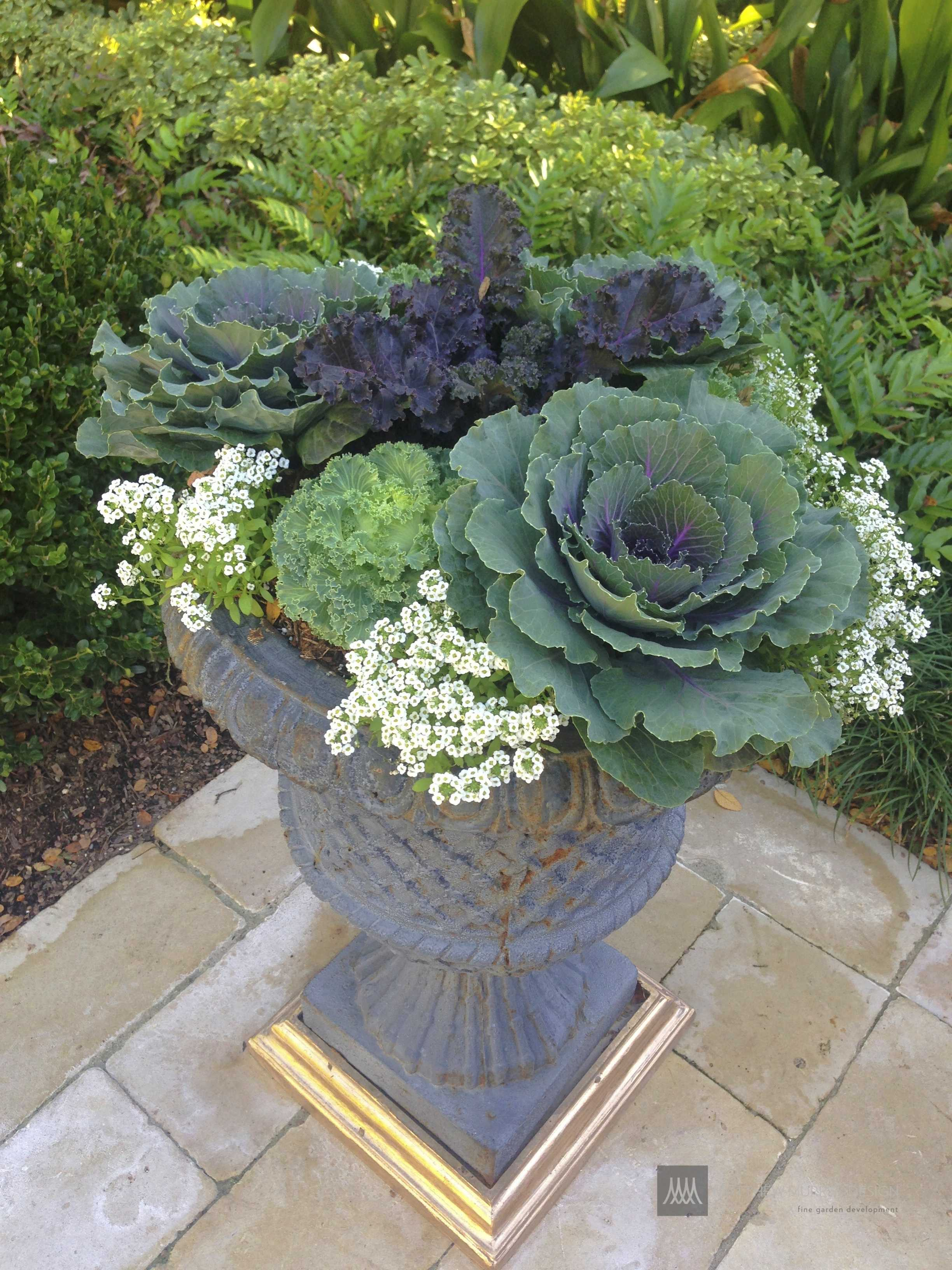 Kale and Cabbage pottery arrangment