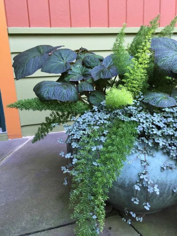 Matthew murrey 39 s landscape design trends for 2018 for Garden design trends 2018