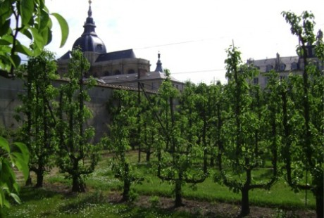 "My favorite of the Versailles Gardens is the ""Potager du Roi"" or the ""Kitchen Garden of the King."" The espaliered pear trees featured in this garden are just spectacular."