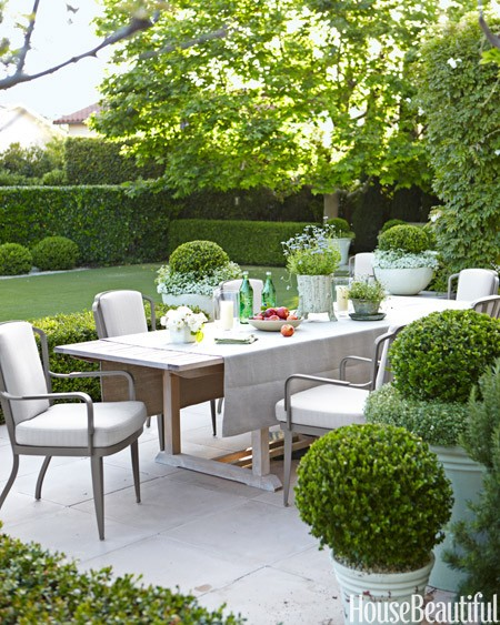 outdoor dining - wood table metal chairs surrounded by boxwood globe
