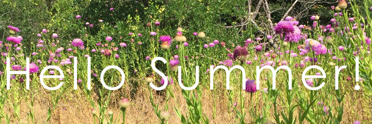 Summer Landscape Ideas - Matthew Murrey Design