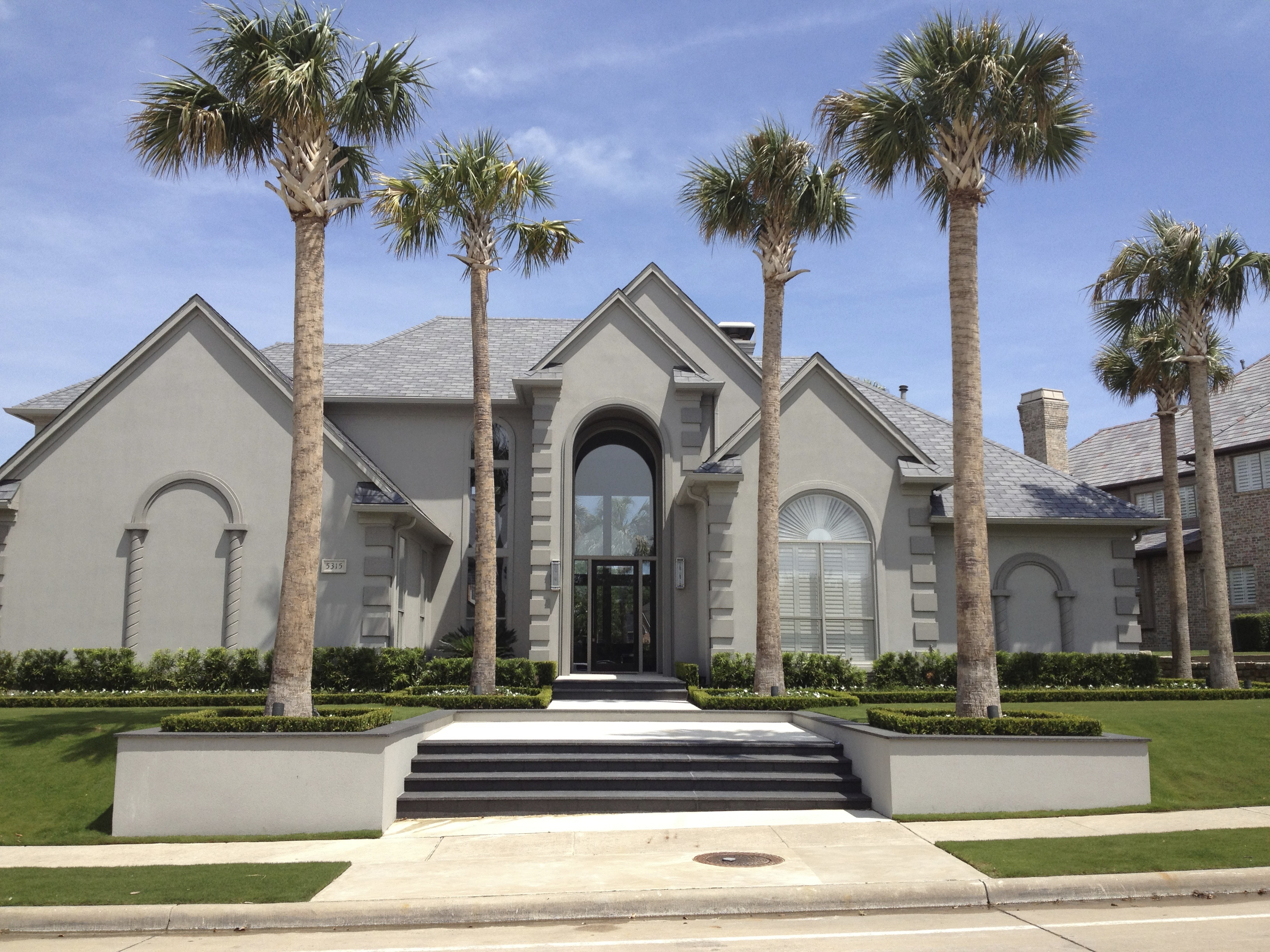 Contemporary Palm Trees