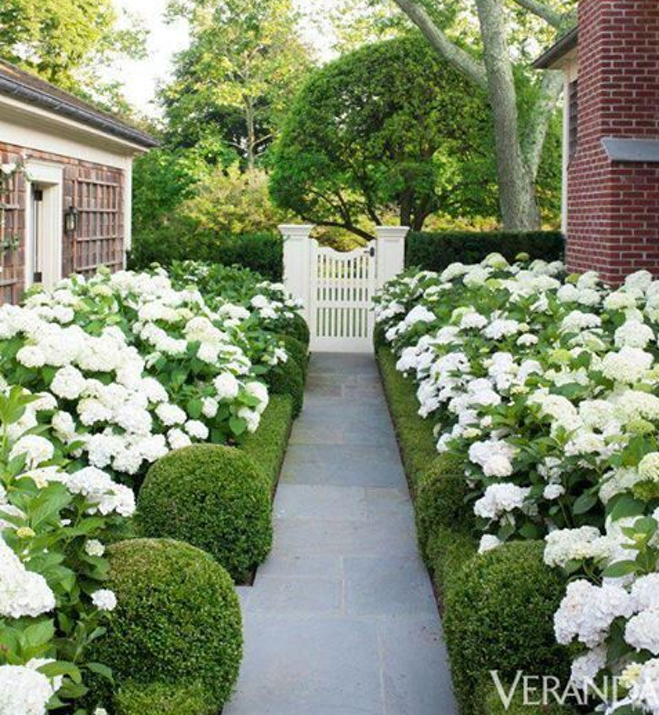 Boxwoods used in traditional landscape with white flowers and white picket fence gate