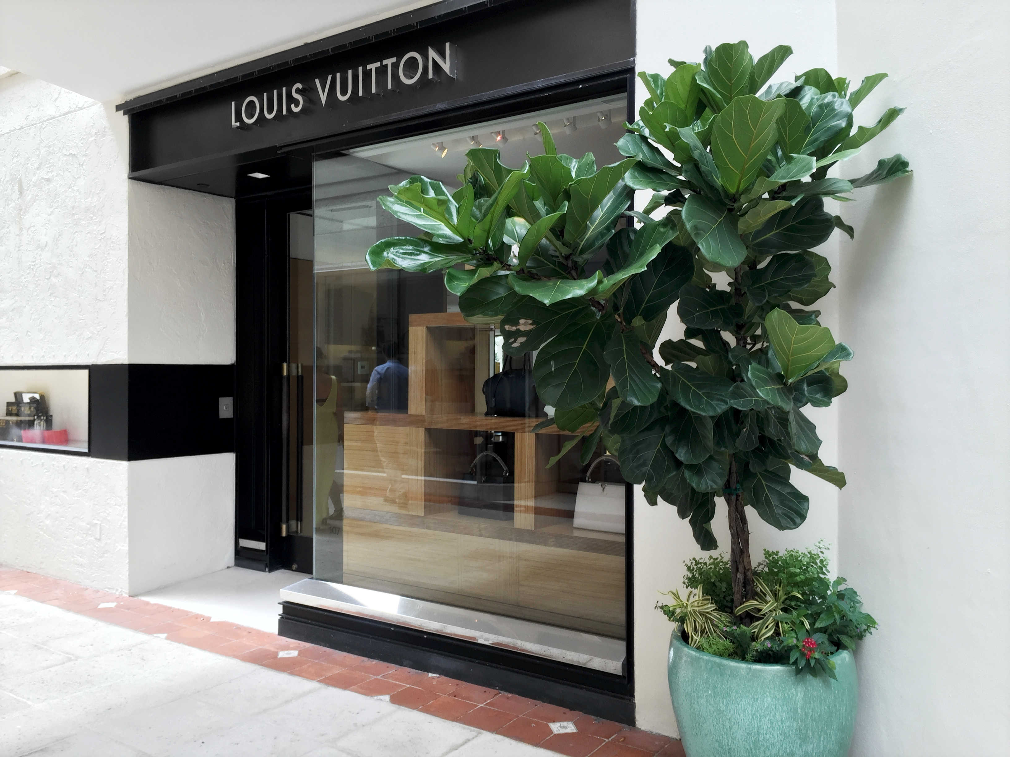 Glazed turquois planters with fiddle leaf fig - Worth Ave, Palm Beach, FL - High End Retail - Landscape Design