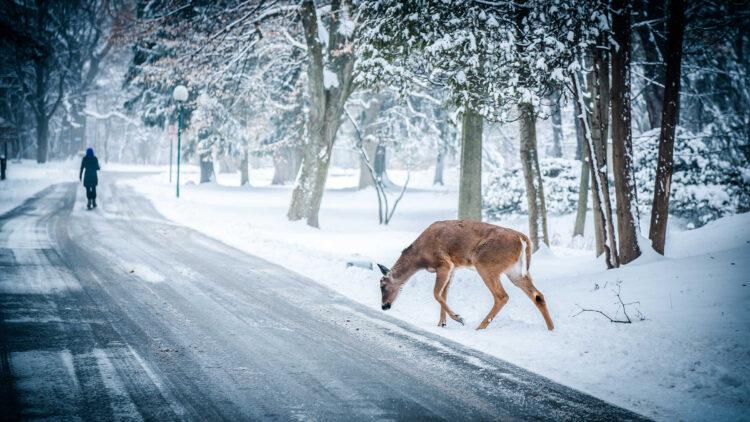 Christmas photo - Amarpreet Kaur - Snapwire Snaps