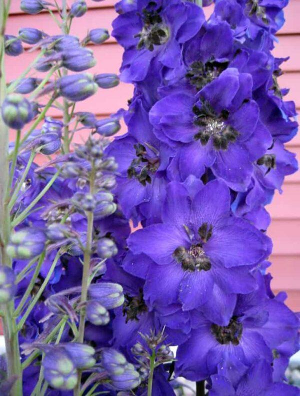 ultra violet landscape panton